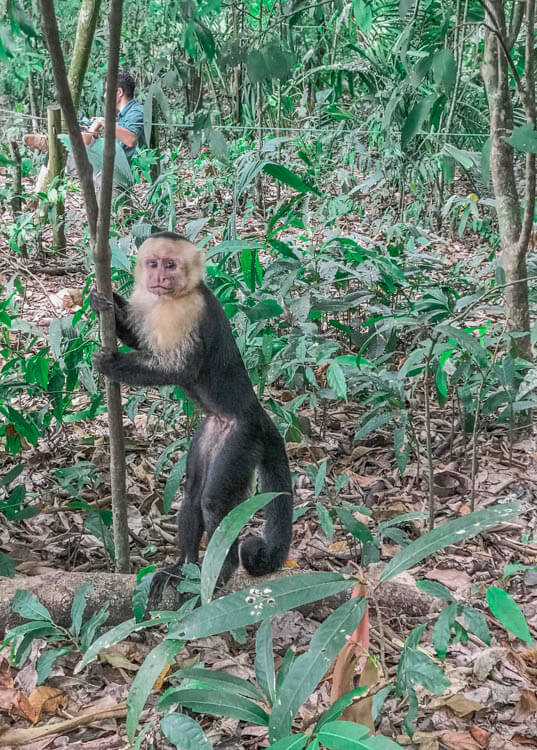 Costa Rica photo of a monkey in the forest