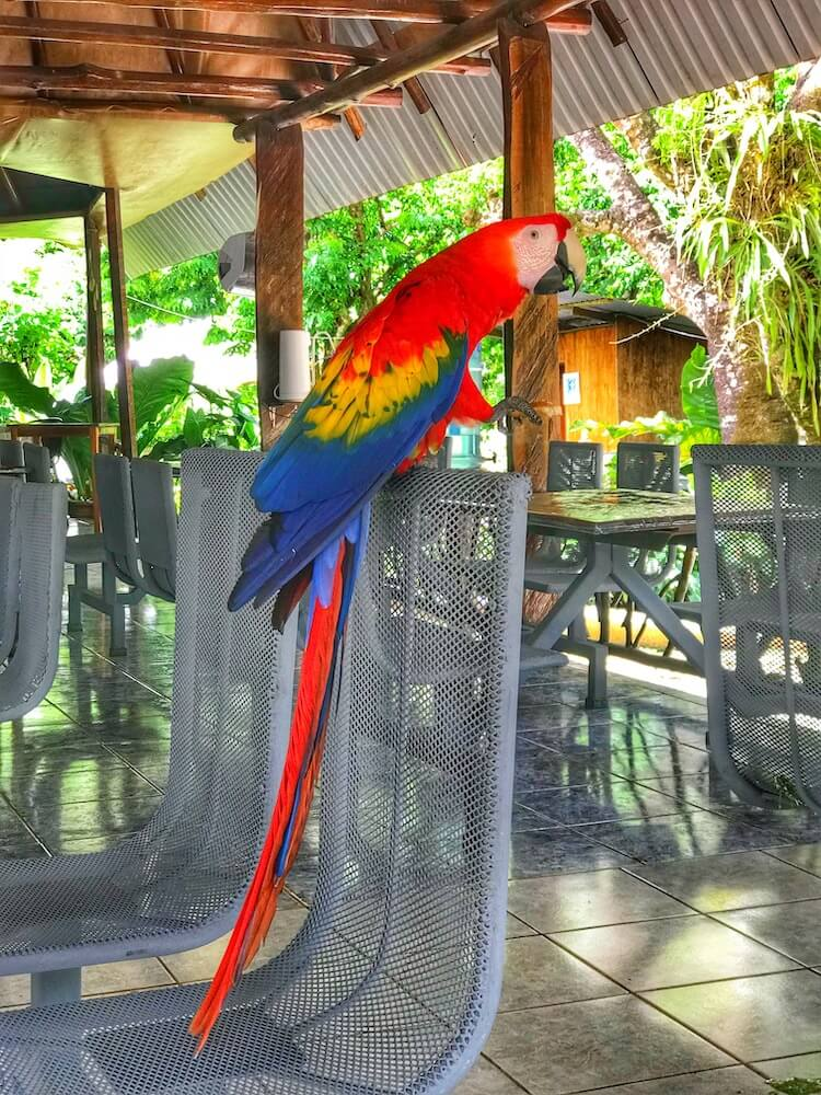Costa Rica photo of a pretty parrot perched on top of a chair