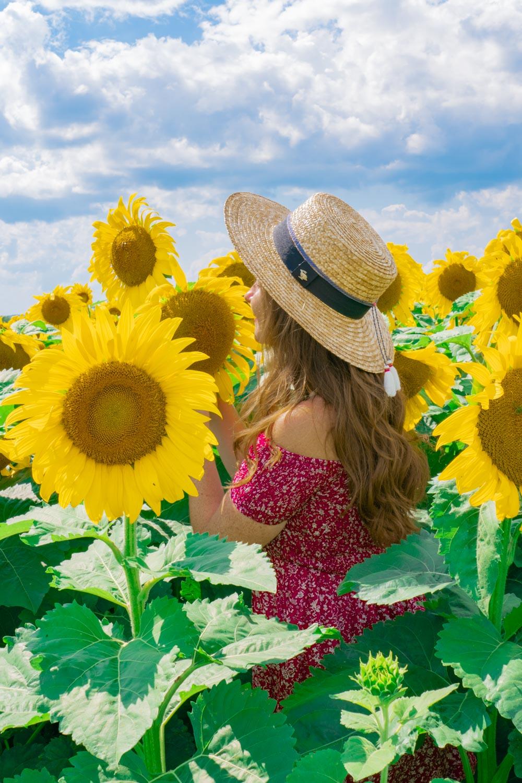 Sunflower Fields Finger Lakes NY