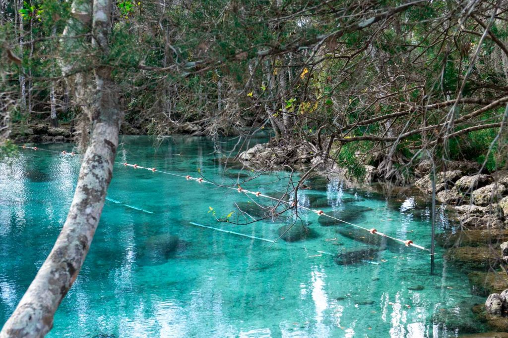Manatee Crystal River